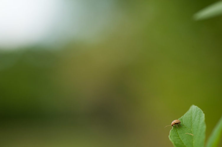 insect life - Brian Gooding - bg-_MAR0996