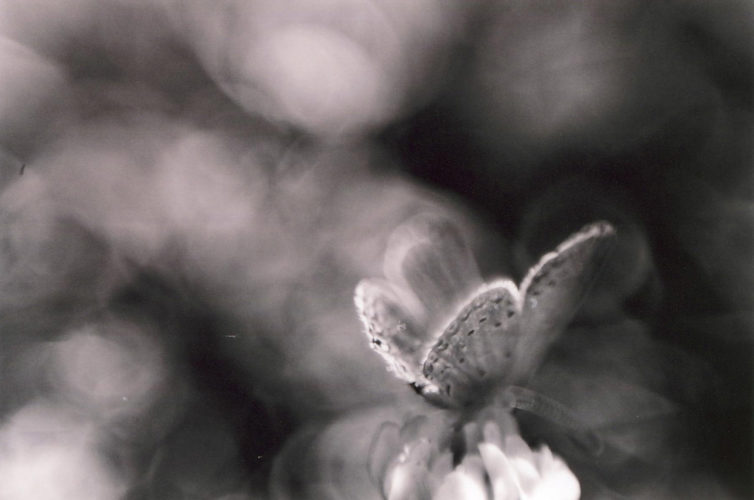 insect life - Brian Gooding - butterfly-insect