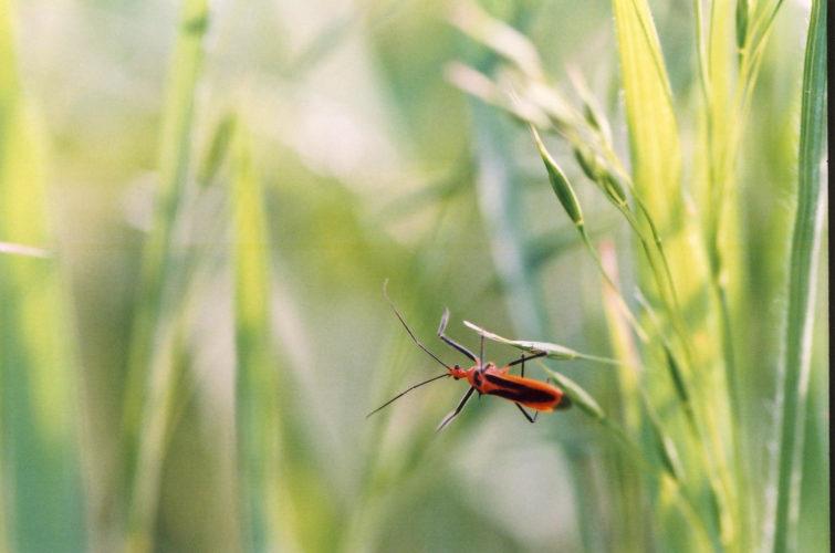 insect life - Brian Gooding - goddamn we