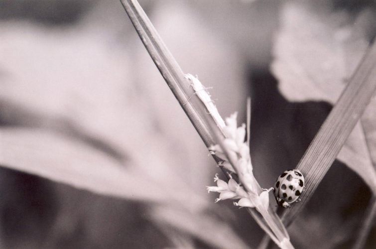 insect life - Brian Gooding - lunatics0002-insect