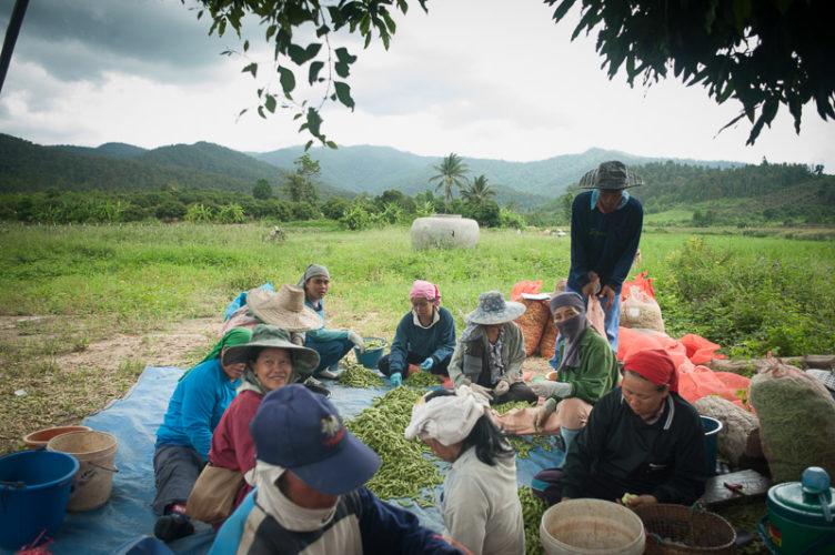 chaos/disparity - soybean farmers